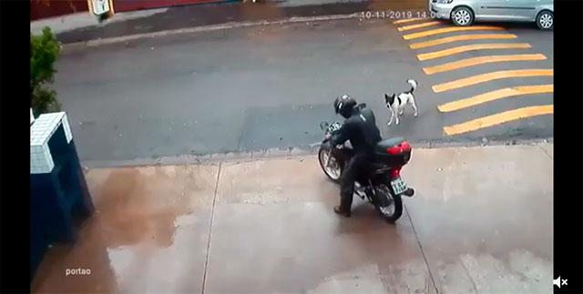 https://www.ahnegao.com.br/2019/12/a-guerra-entre-cachorros-e-motociclistas-teve-uma-reviravolta-inesperada.html