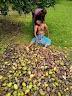 আম নিয়ে ঝিনাইদহের কৃষকের করুন পরিনতি