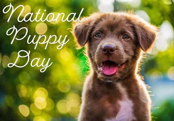 National Puppy Day Wishes Unique Image