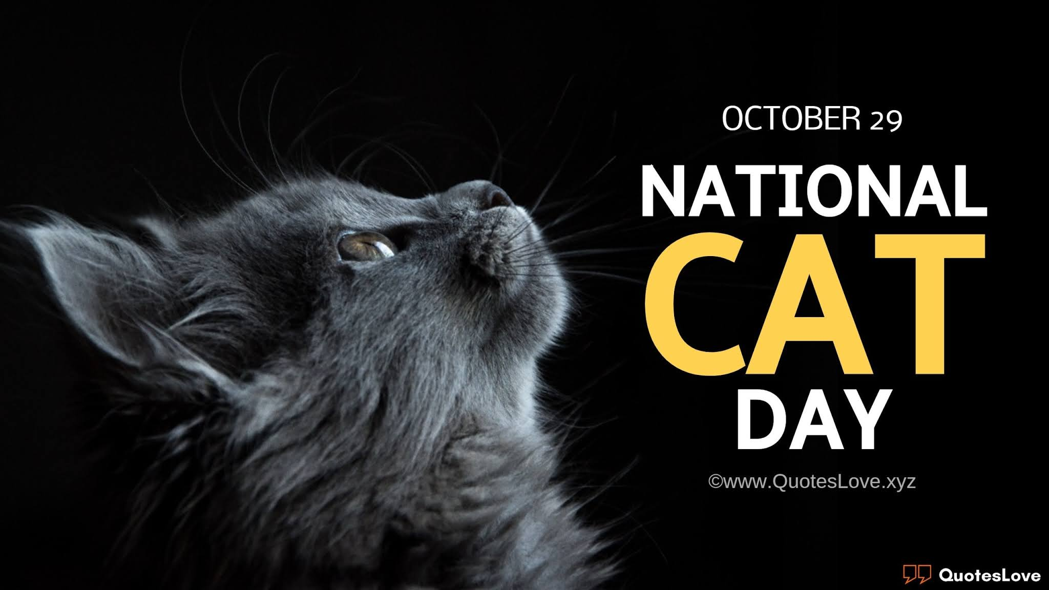 National Cat Day Quotes, Sayings, Messages, Images, Poster, Photos, Pictures