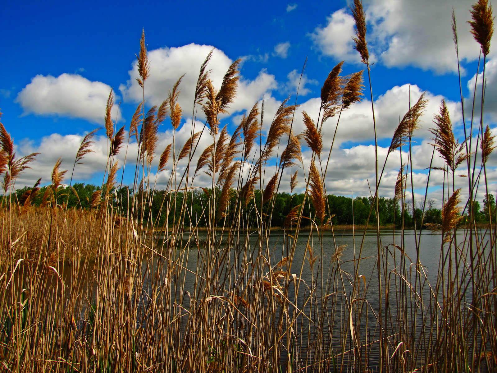 Gambar-Gambar Rumput yang Tinggi | wallpaper