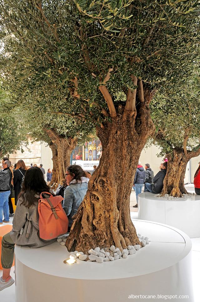 Milano, ulivi secolari in piazza Duomo