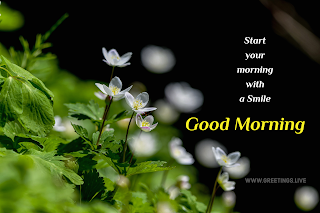 Beautiful white flowers and gree leafs morning wishes