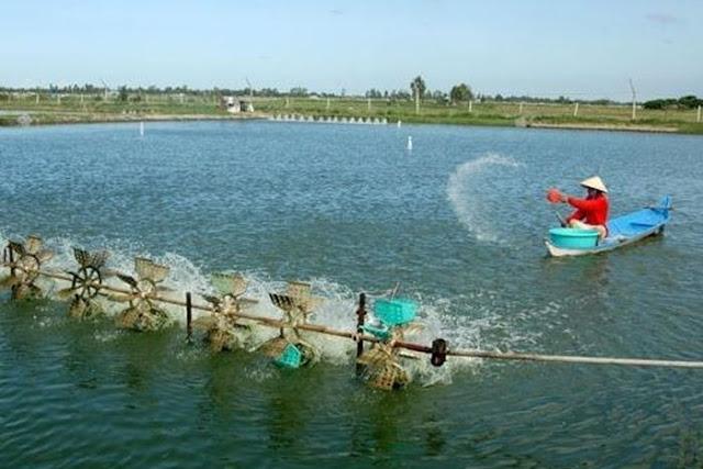 nhập khẩu sản phẩm xử lý môi trường nuôi truongf thủy sản