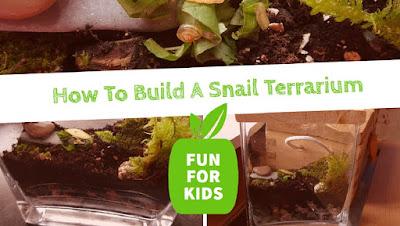 How To Build A Snail Terrarium