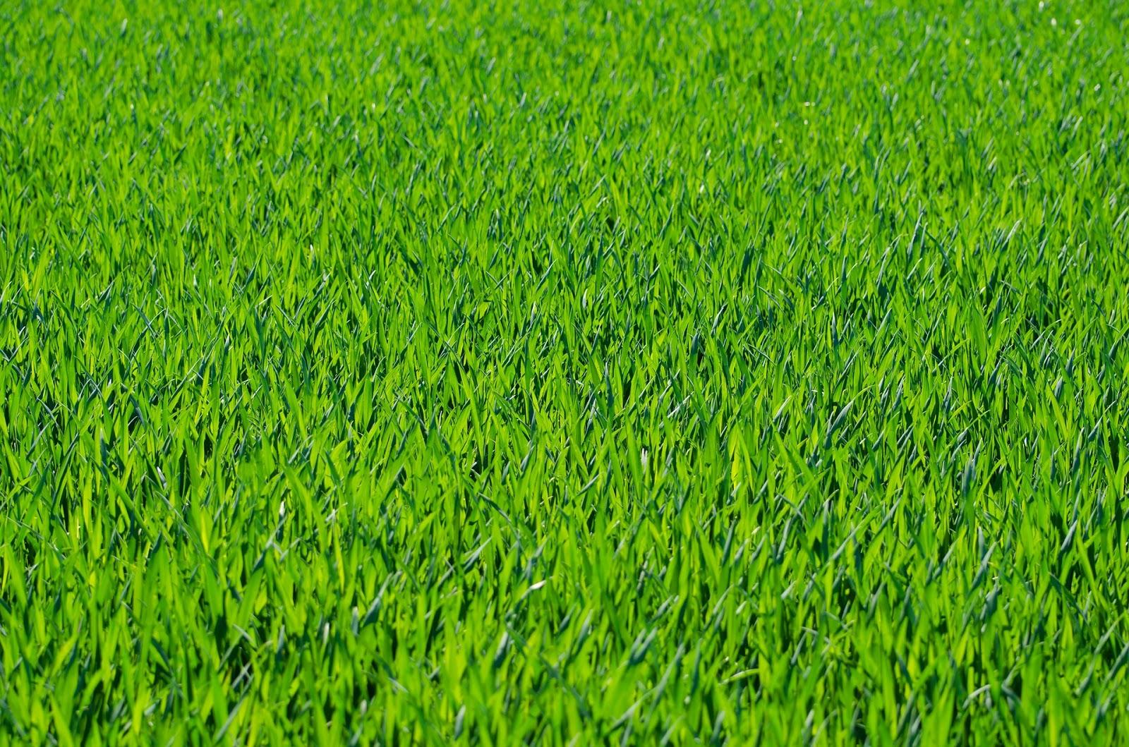 صورطبيعيه خضراء جميلة