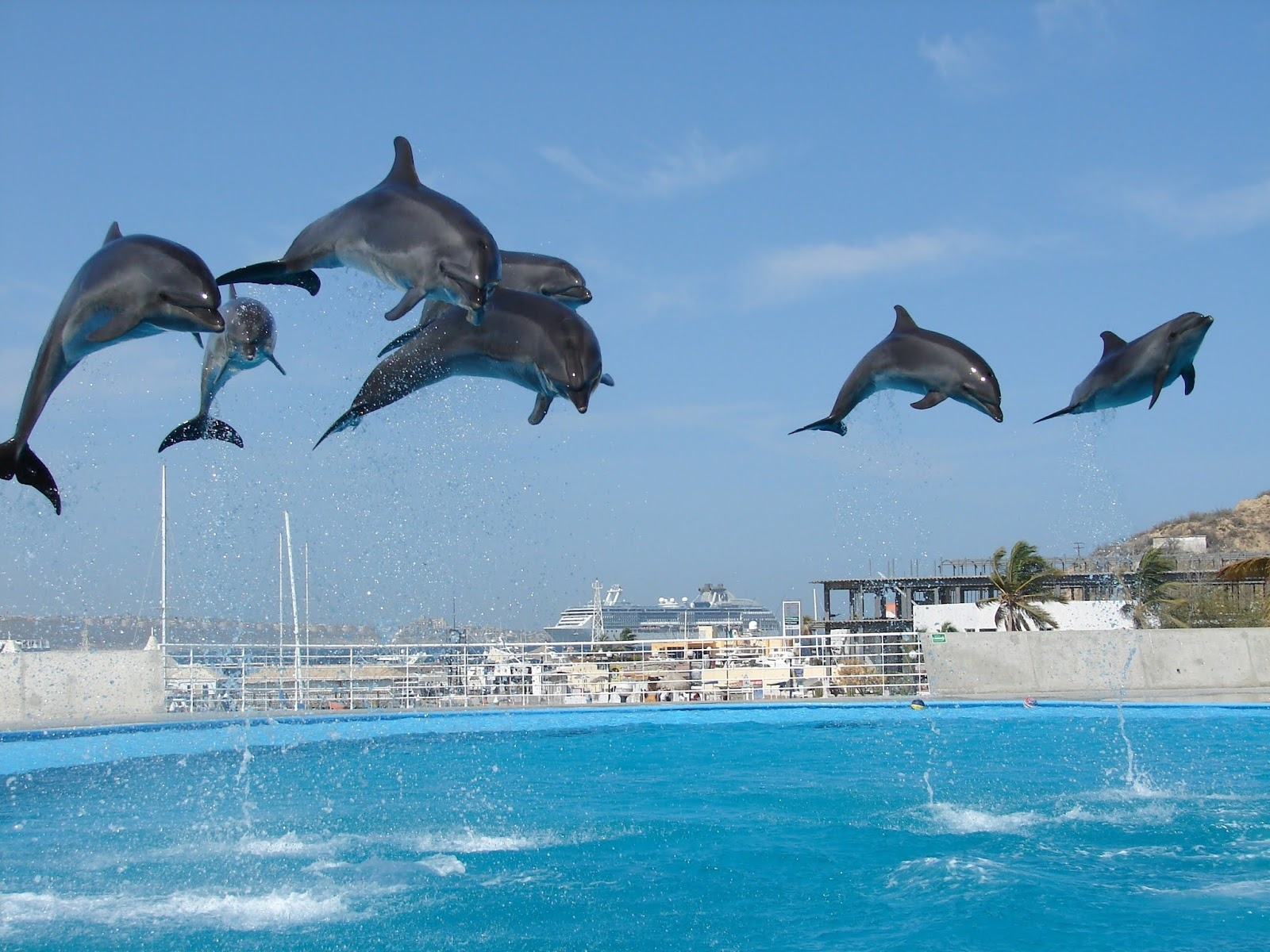 100+ Dolphins HD Pictures - World Most Intelligent 2nd Animals