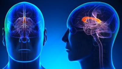 10 Jenis Makanan Terbaik Untuk Kecerdasan Otak
