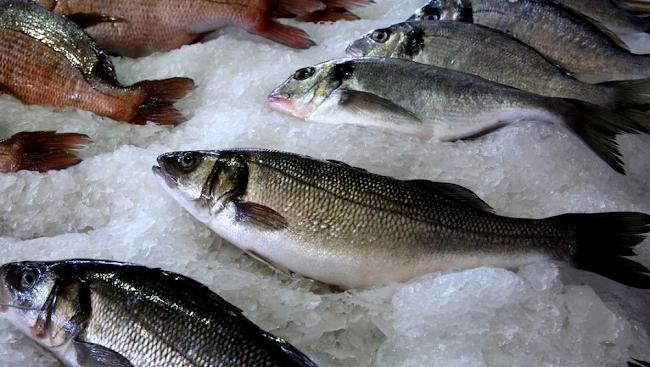Χρ. Στελακάτος: «Η βιομηχανία ψαριών μάς ταΐζει καρκίνο, δεν θα σταματήσω να το λέω»