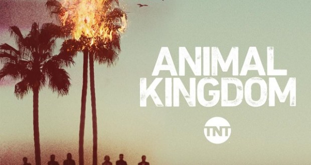 Download Animal Kingdom Season 1-2 Complete 480p All Episodes