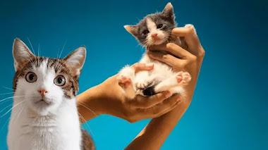 10 asociaciones para ayudar animales sin hogar en España