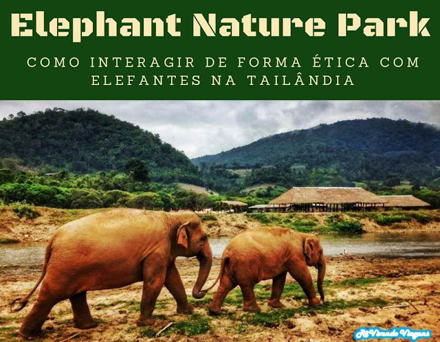 Como interagir de forma ética com elefantes na Tailândia