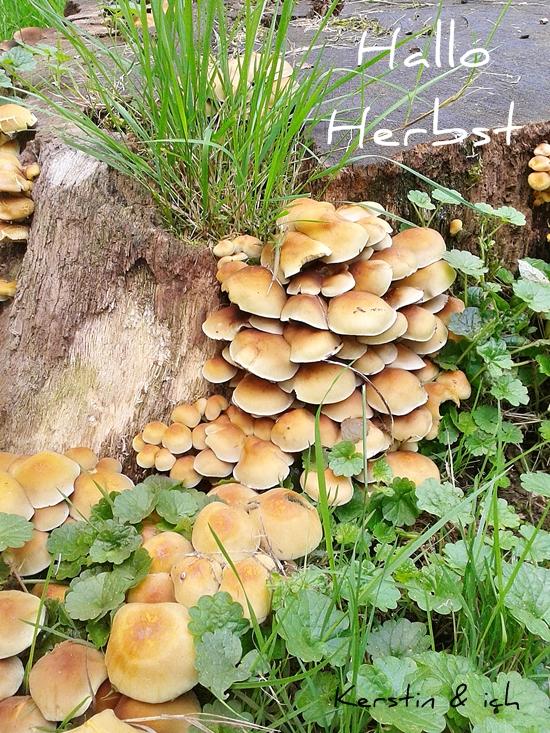 5 am 5. Ideen für einen gemütlichen Herbst Naturfoto Pilze