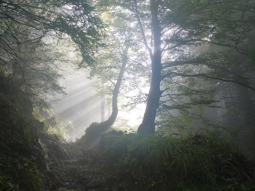 Amanhecer, raio de sol dissipando nevoeiro. #PraCegoVer