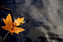 EEUU otoño