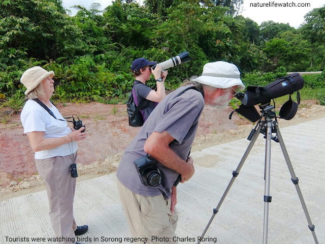 Some British tourists were watching birds at a quiet road in West Papua