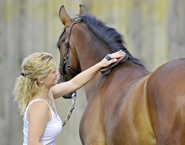 The 10 Basic Rules to Help You Deal With Your Horse Like a Pro