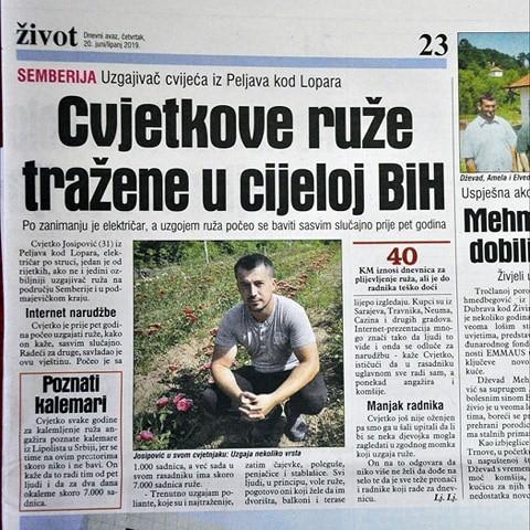 Rasadnik ruža Peljave, Cvjetko Josipović
