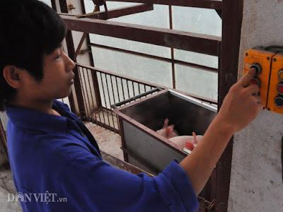 Công nhân chuyển đàn heo giống bằng cầu thang máy tại trang trại của ông Long ở huyện Thanh Oai (Hà Nội).