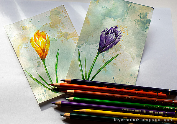 Layers of ink - Crocus in Watercolor and Pencil Tutorial by Anna-Karin Evaldsson. With Simon Says Stamp Thoughtful Flower stamp. Add color with colored pencils.