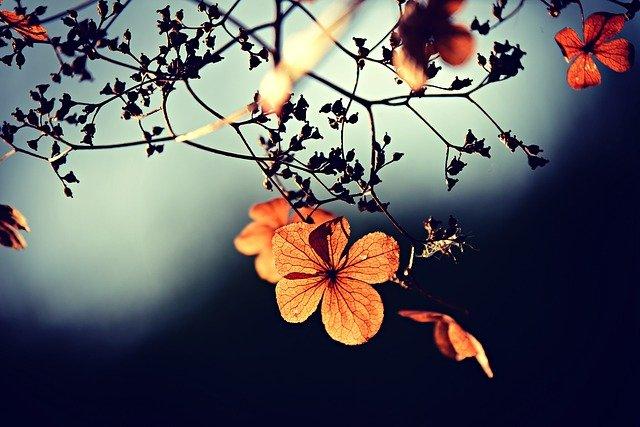 gambar bunga yang bagus