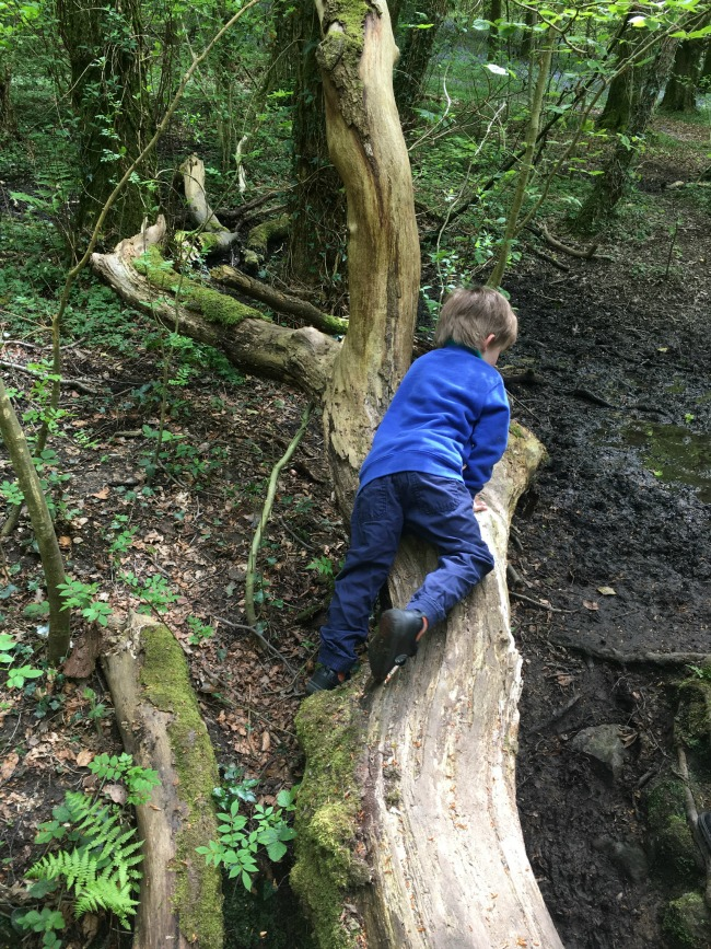 boy-crawling-on-log-in-woods-at-The-Wenallt