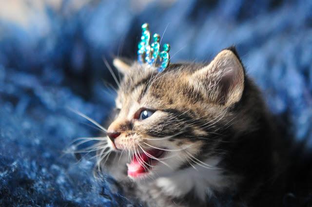 wilma kitten-4 by julochka from flickr (CC-NC)