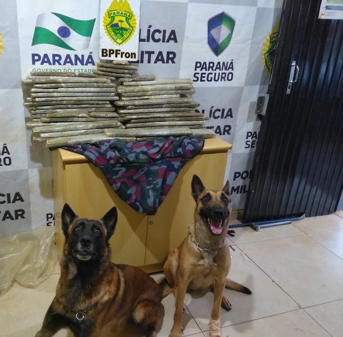 Cascavel: Cão do BPFron localiza maconha dentro de bancos de madeira