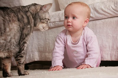 Tabby cat and baby