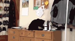 ¿Por qué los gatos tiran cosas al suelo?