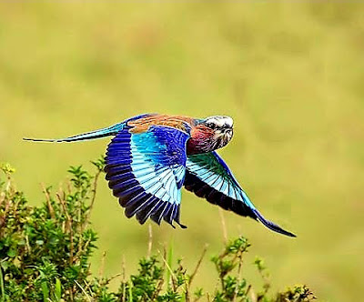 Birds of the Mara