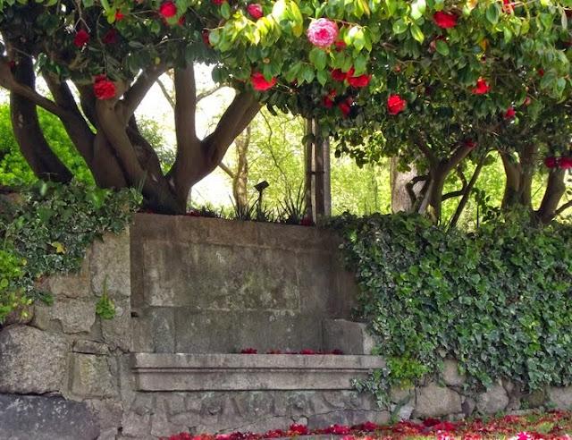 banco de pedra e árvore de camélias
