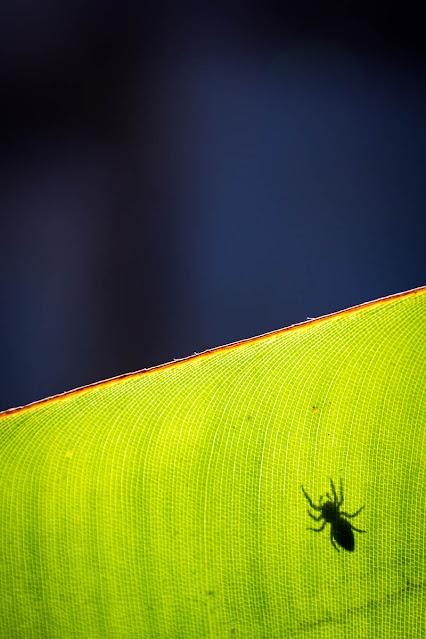 Minimalismo, foto de Carlos Larios