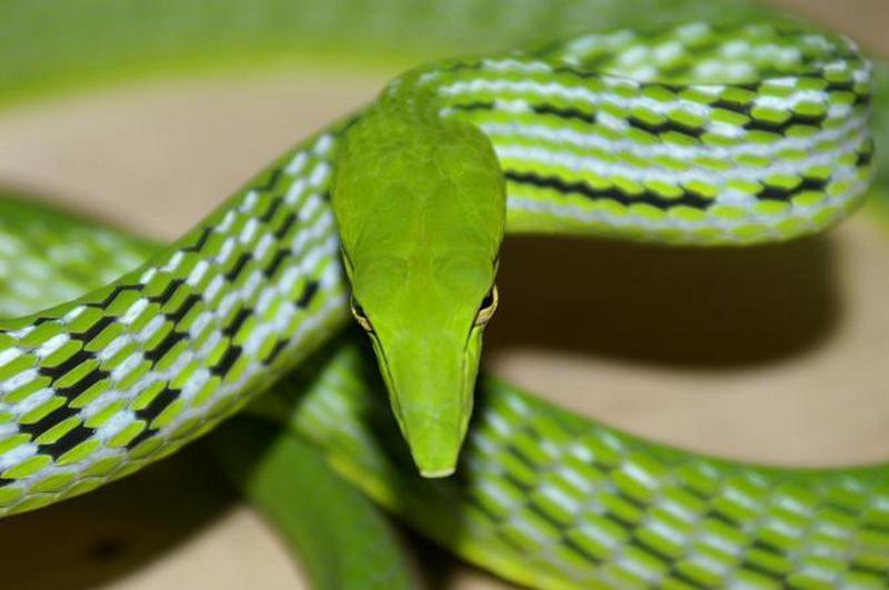 All About Beautiful Bali: Bali - Snakes