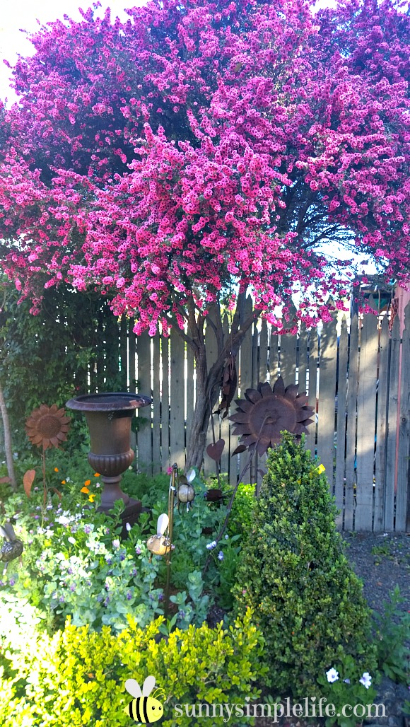rusty garden art, flowering tree