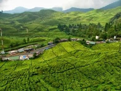 Tempat Wisata Di Puncak Bogor Jawa Barat