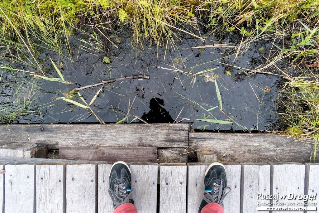 Ile żab widzisz?