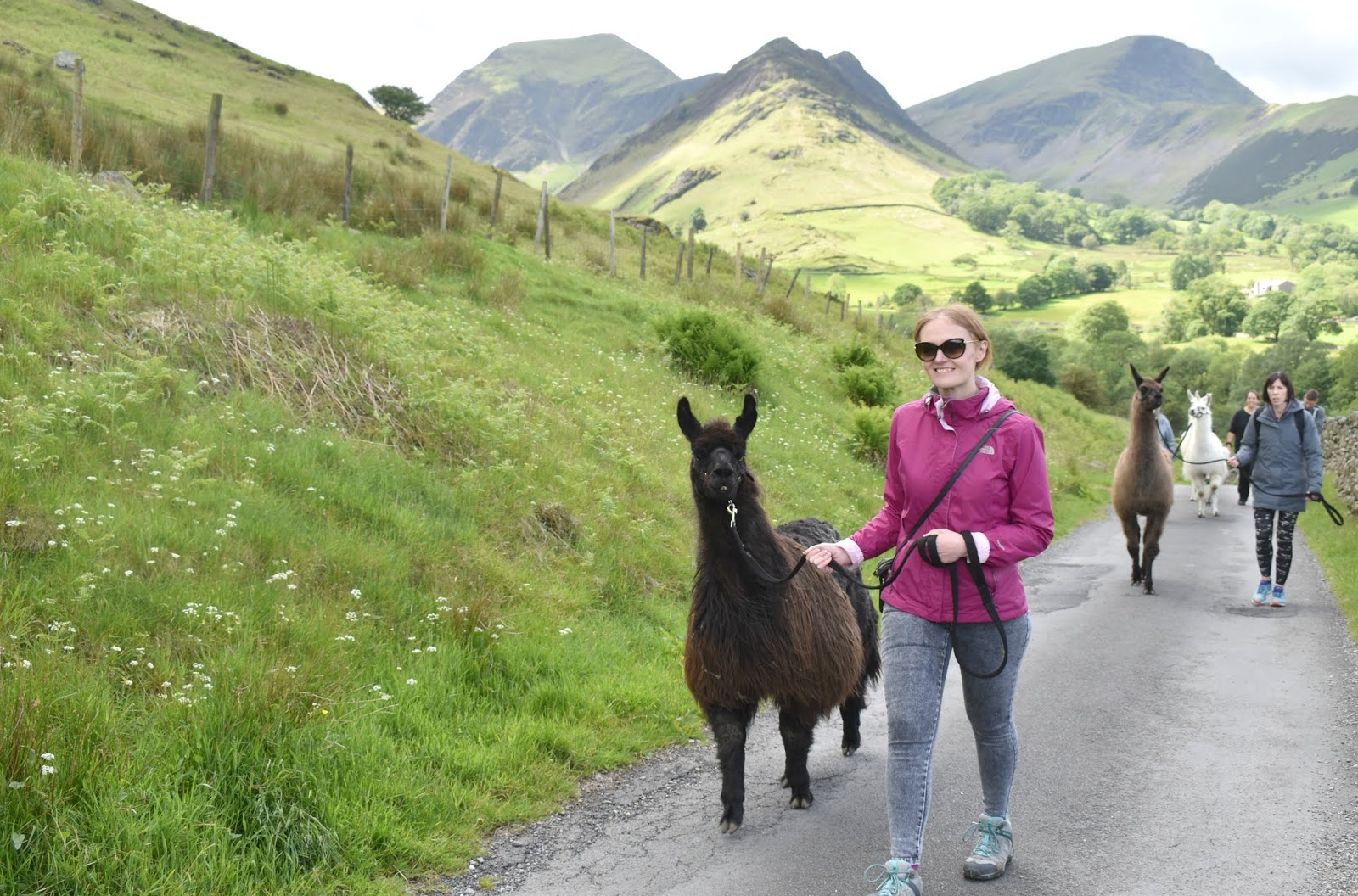 Llama Trekking in the Lake District with Once Upon a LLama