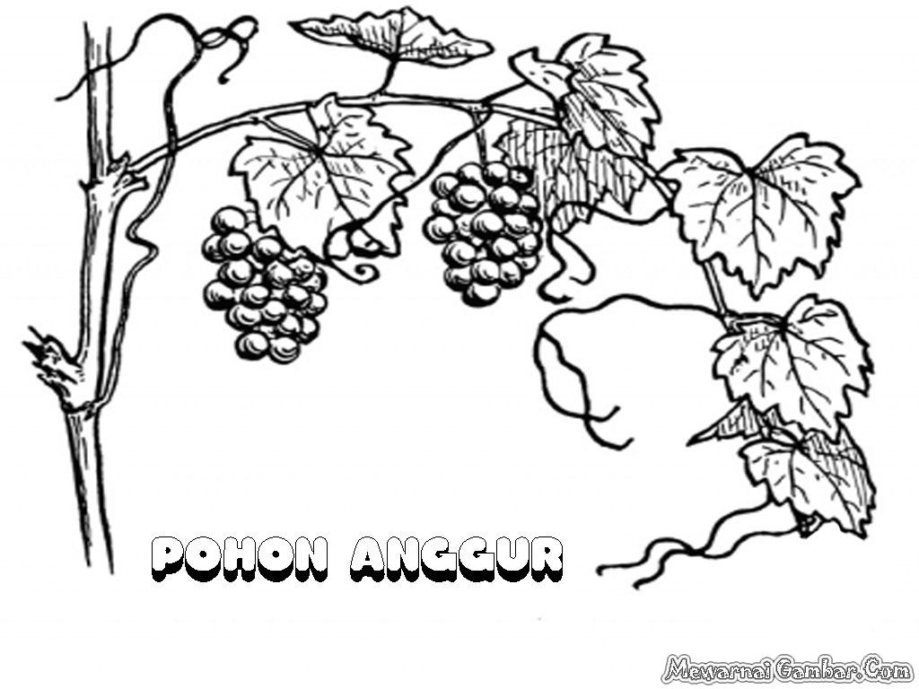 28 images of Gambar Sketsa Pohon Anggur