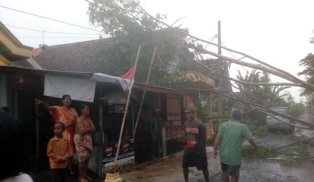 Salahsatu rumah yang rusak usai tertimpa pohon
