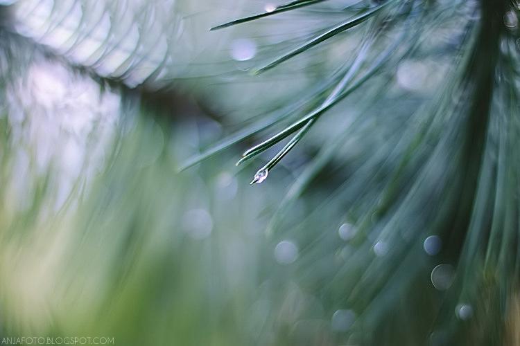 krople, deszcz, bokeh, rainy mood, krople deszczu, canon 50mm 1.4