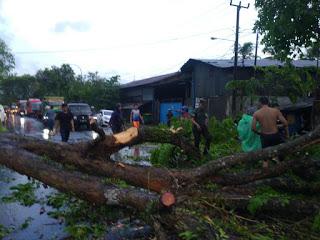 Hujan di Sertai Angin Kencang, Tumbangkan 9 Pohon Besar