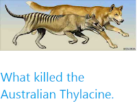https://sciencythoughts.blogspot.com/2012/05/what-killed-australian-thylacine.html