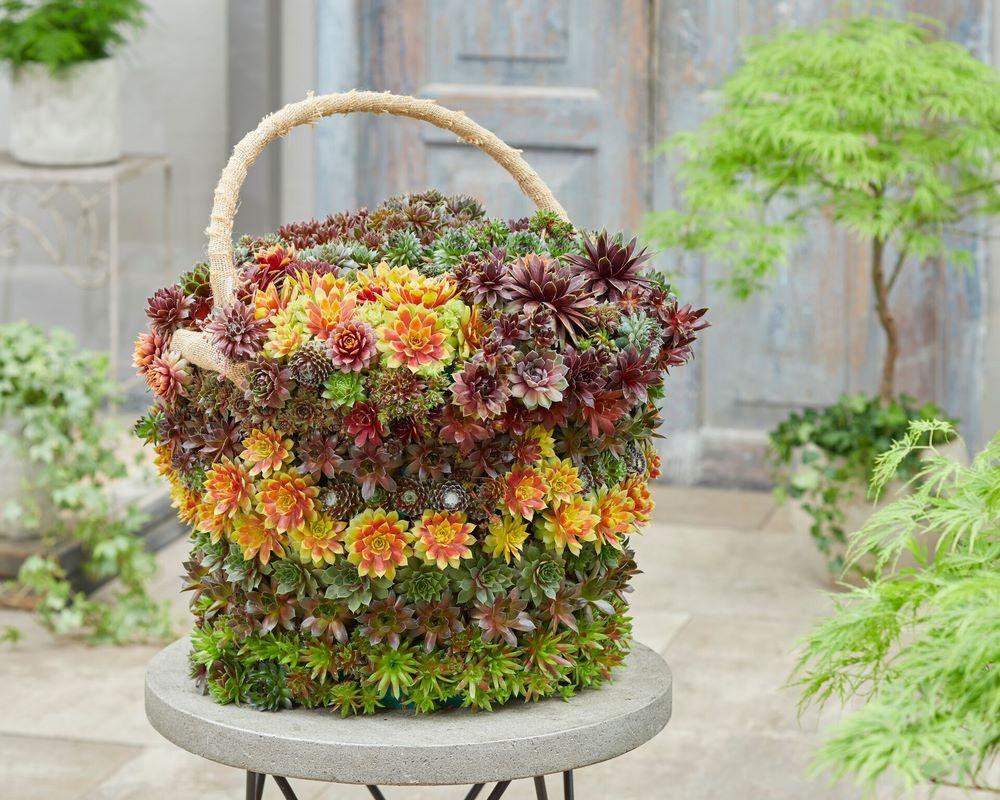 Tarta alta o cesta alta con suculentas sempervivum arreglo floral