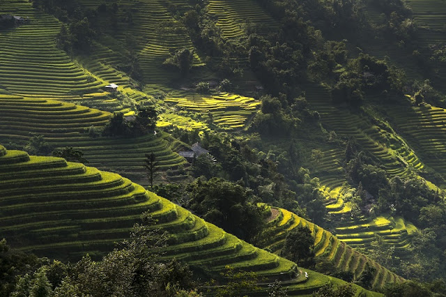 3 Incredible Terrace Fields In Vietnam 2