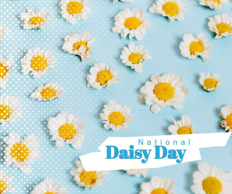 National Daisy Day Wishes Pics