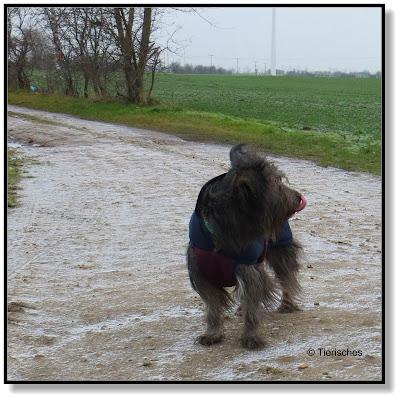 ältere Hunde brauchen im Winter einen Mantel