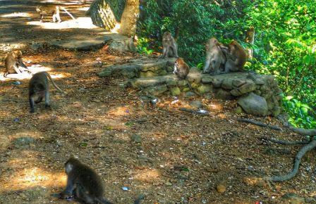 Hutan Monyet Pusuk hutan monyet pusuk lombok