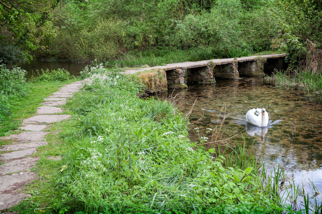 A swan glides past a clapper bridge in the historic village of Eastleach