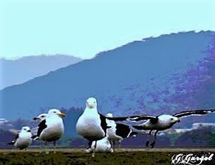 Imagem de gaivotas